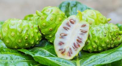 Noni: a planta que cura 27 enfermidades confira.